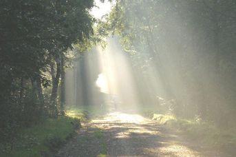 Hesel-Erlebnis-Route 41 Km