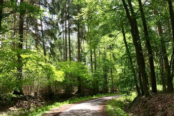 Linsweger Eschweg